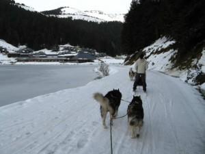 Perros tirando de un rineo cerca de la estación. El esquí nórdico domina en Campan - Payolle