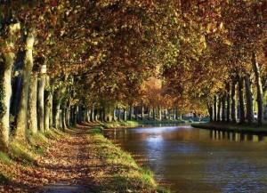 Vista paradisíaca del Canal du Midi entre hileras de árboles. Una idea genial para un viaje diferente.