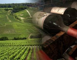 El viñedo bordelés es el más famoso del mundo. ENtorno a los ríos Dordoña y Garona se encuentran varias denominaciones de origen diferentes.