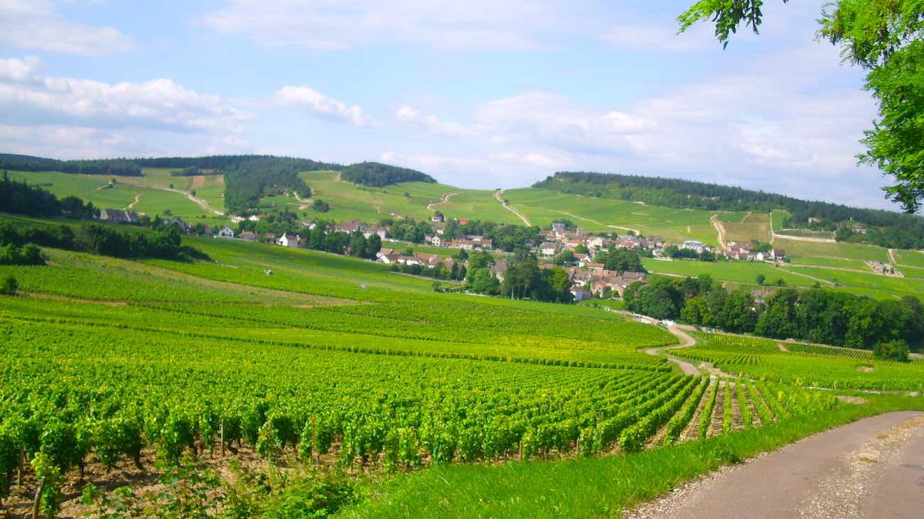 Las suaves colinas de Borgoña producen vinos suaves y sutiles, que convencerán a quienes busquen sabores dóciles.