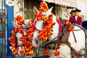 Ferias de Nimes, toros, bodegas y pasodobles.